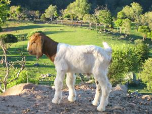 Fordsdale Farm Animals