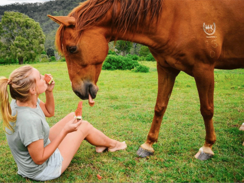 Fordsdale Horse eats watermelon