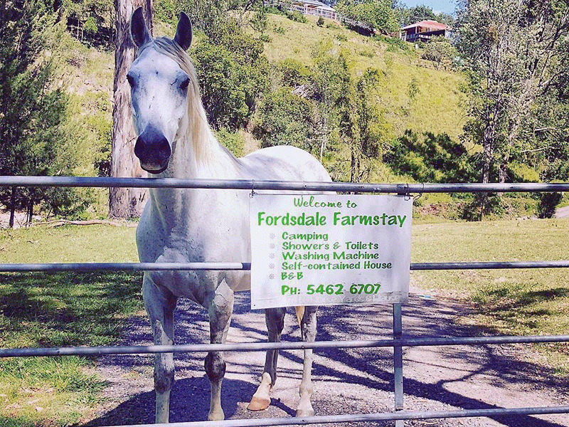 Fordsdale Horse Welcomes You