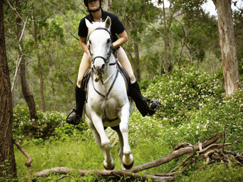 Fordsdale Horse Trail Riding, Lindsay jumping Kuro